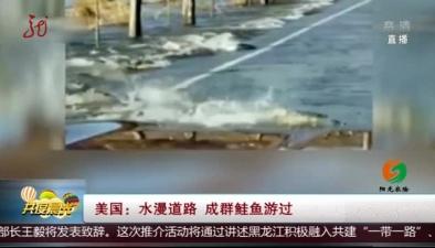 美國:水漫道路 成群鮭魚遊過