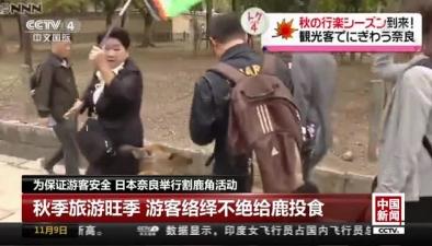 為保證遊客安全 日本奈良舉行割鹿角活動