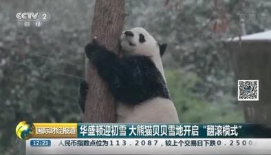 """華盛頓迎初雪 大熊貓貝貝雪地開啟""""翻滾模式"""""""