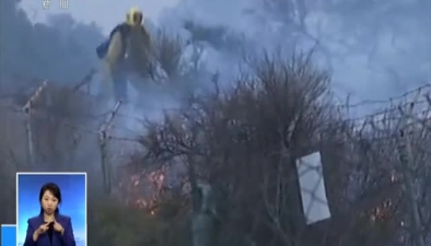 美國加州山林大火專家分析:加州為何山火頻發?