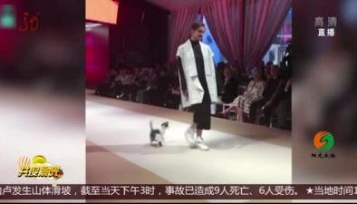 模特走秀 小貓亂入