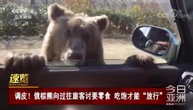 """調皮!俄棕熊向過往旅客討要零食 吃飽才能""""放行"""""""