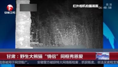 """甘肅:野生大熊貓""""情侶""""同框秀恩愛"""
