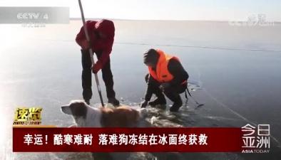 幸運!酷寒難耐 落難狗凍結在冰面終獲救