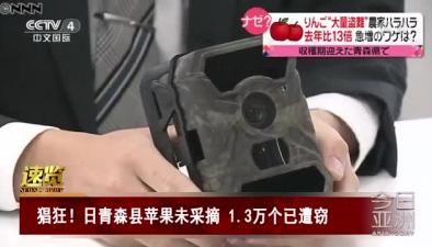 猖狂!日青森縣蘋果未採摘 1.3萬個已遭竊