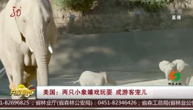 美國:兩只小象嬉戲玩耍 成遊客寵兒