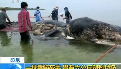印尼:一抹香鯨死去 胃有六公斤塑料垃圾
