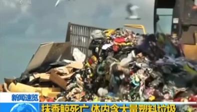 抹香鯨死亡 體內含大量塑料垃圾