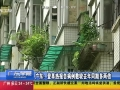 廣東:登革熱報告病例數較去年同期多兩倍