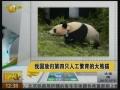 我國放歸第四只人工繁育的大熊貓