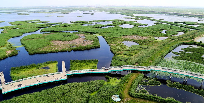 新华全景VR感受大庆龙凤湿地的自然魅力