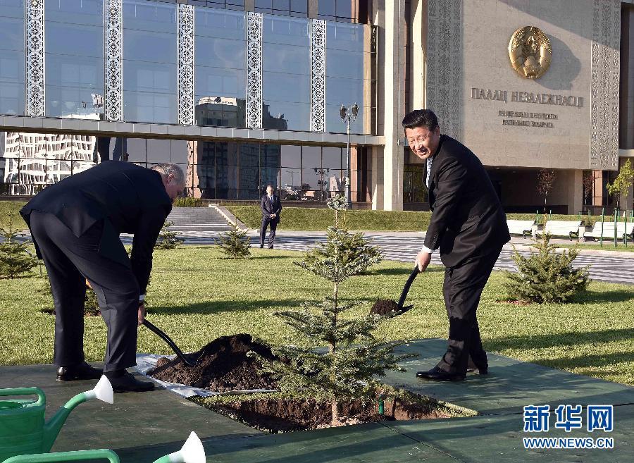 5月10日,國家主席習近平與白俄羅斯總統盧卡申科一道,在明斯克獨立宮貴賓林種植象徵兩國人民友誼的雲杉樹。 新華社記者李濤攝