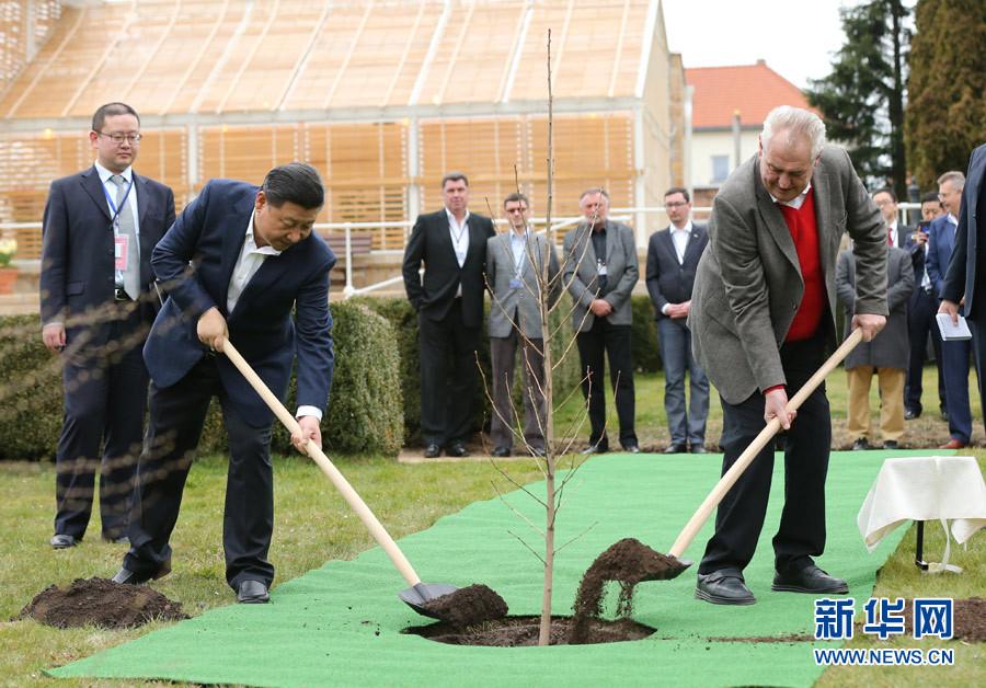 當地時間3月28日,國家主席習近平在布拉格拉尼莊園同捷克總統澤曼舉行會晤。會晤前,兩國元首在莊園裏種下一株來自中國的銀杏樹苗。新華社記者 蘭紅光 攝