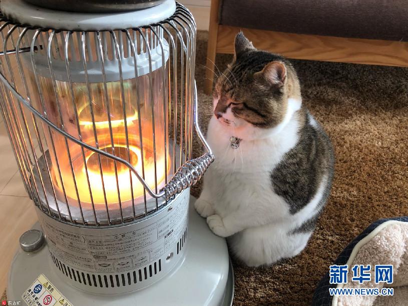 """日本""""烤火""""猫吸粉无数_""""守护""""暖气寸步不离"""