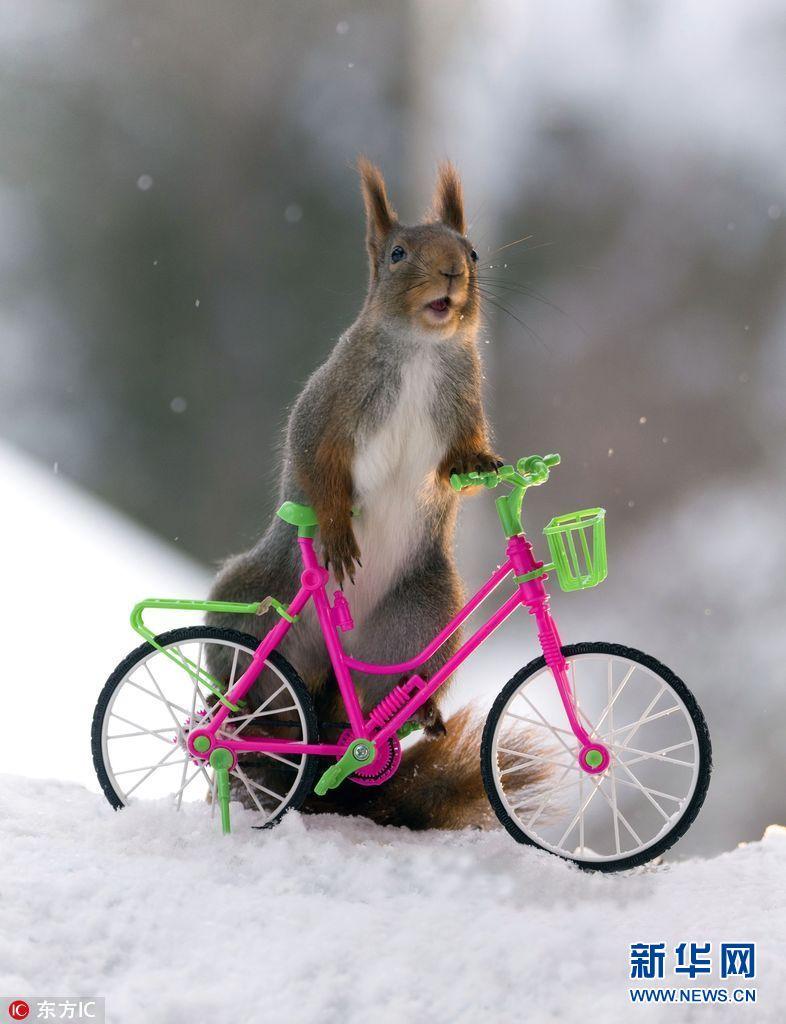 瑞典摄影师拍小松鼠骑车秀特技 画面分外有趣