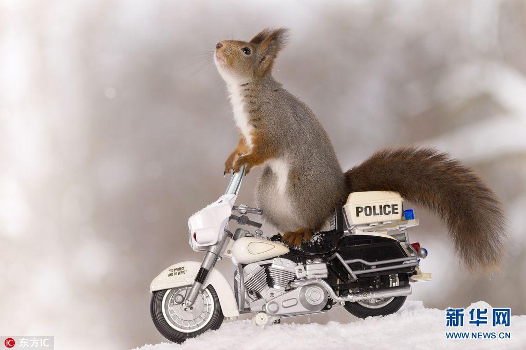 瑞典小松鼠骑车秀特技