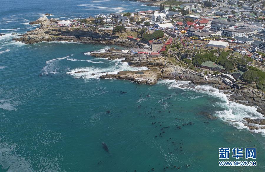 (國際)(8)第27屆鯨魚節南非赫曼紐斯開幕