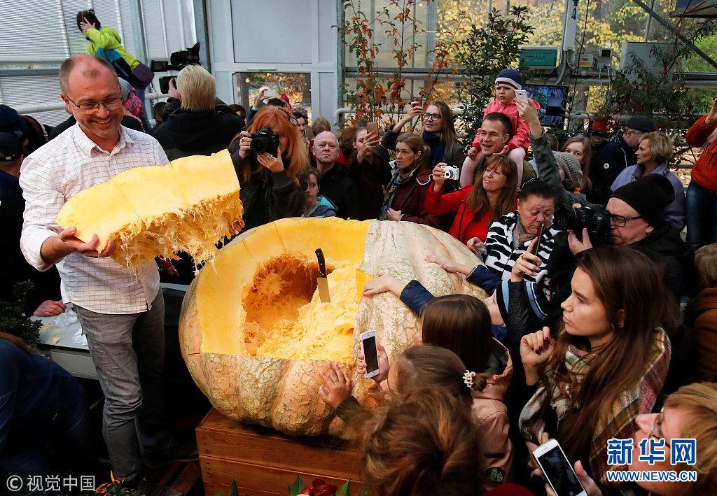 俄罗斯民众见证重达645公斤巨型南瓜切割仪式