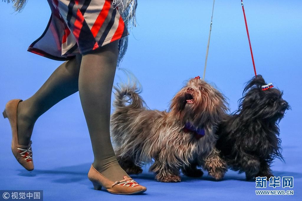 2018年俄罗斯国际狗展在莫斯科举行