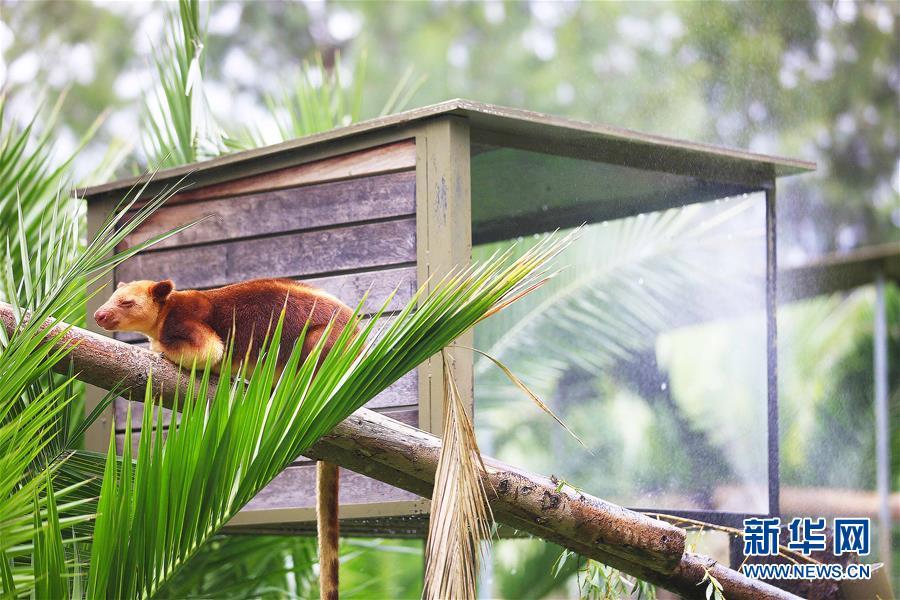 """热浪来袭 澳动物园帮动物""""过暑假"""" - 达州日报网"""