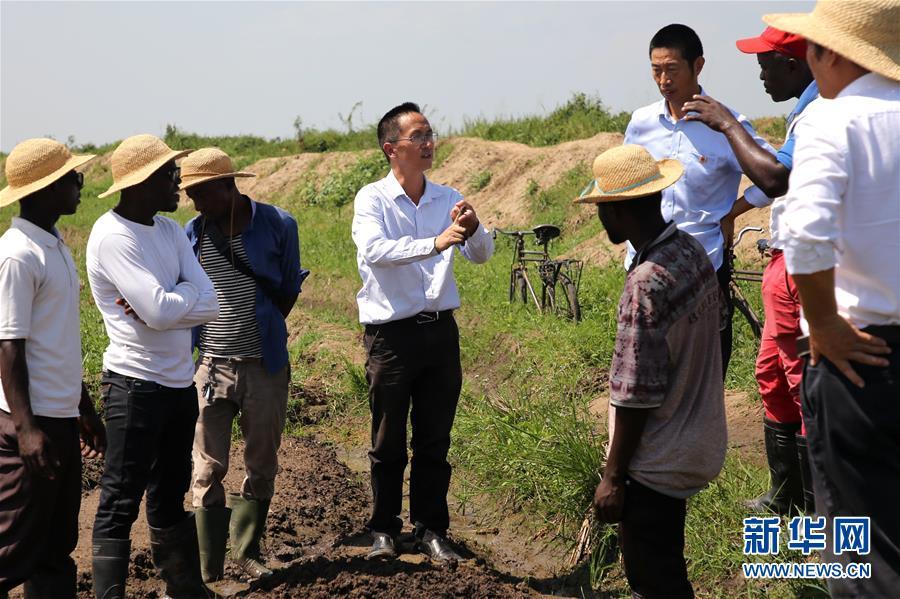 (國際·圖文互動)(1)種植中國雜交水稻改變布隆迪農民生活