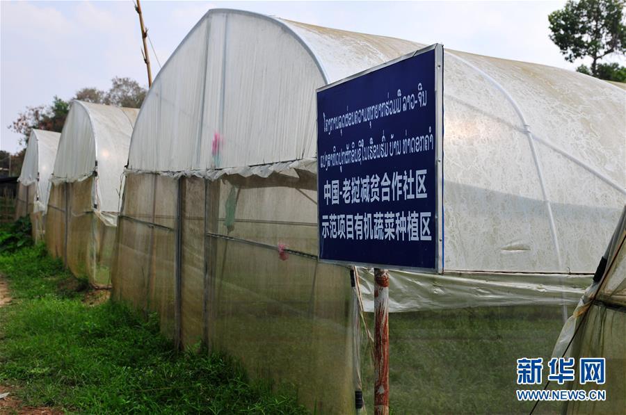 """(国际·""""一带一路""""高峰论坛·图文互动)(1)蔬菜基地诞生记——中国技术让老挝首都郊区农户受益匪浅"""