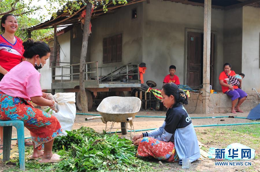 """(国际·""""一带一路""""高峰论坛·图文互动)(2)蔬菜基地诞生记——中国技术让老挝首都郊区农户受益匪浅"""
