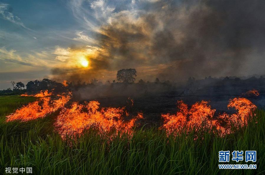 印尼一棕榈种植园发生大火 浓烟滚滚