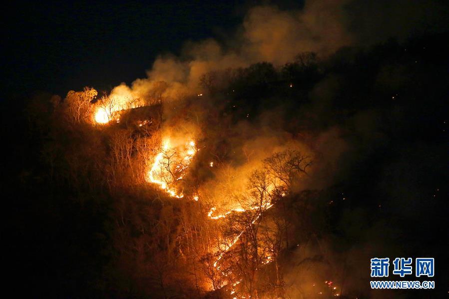 (国际)(3)巴西森林火灾数量激增 逾半数发生在亚马孙雨林