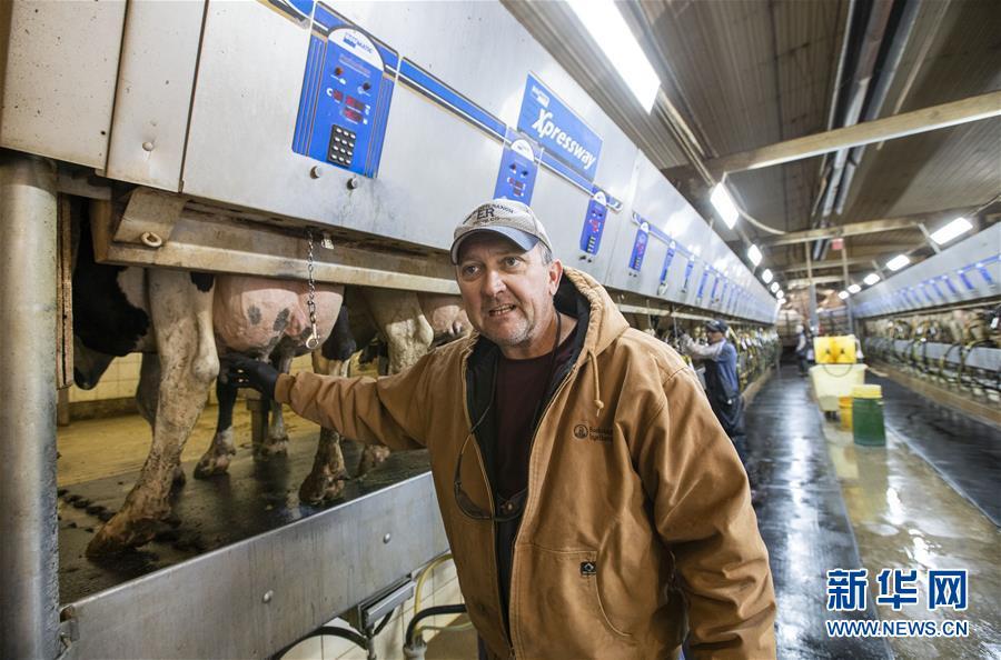 """(国际·图文互动)(1)通讯:""""希望我们的乳制品顺利装船驶向中国""""——美国奶农期盼中美贸易争端早日解决"""