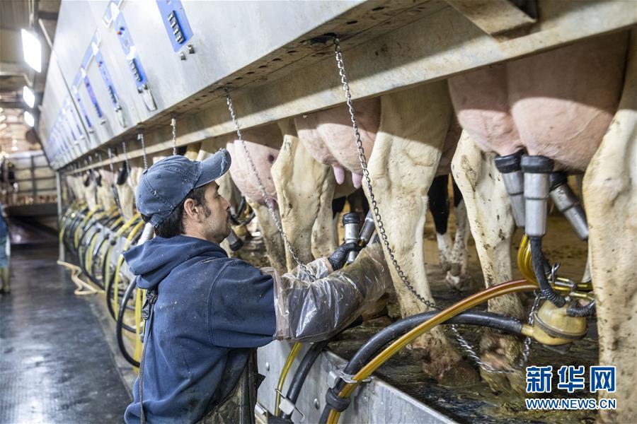 """(国际·图文互动)(5)通讯:""""希望我们的乳制品顺利装船驶向中国""""——美国奶农期盼中美贸易争端早日解决"""
