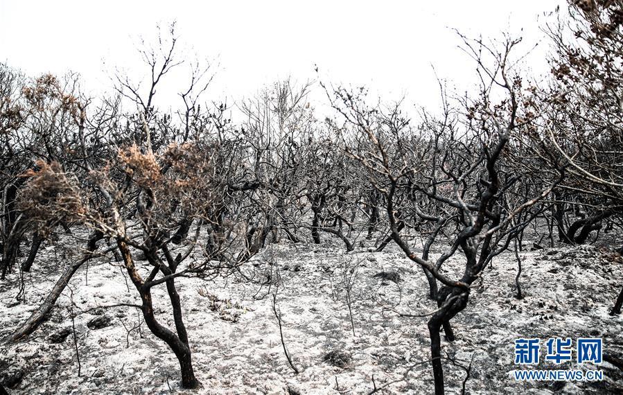 (國際)(1)澳新南威爾士州因林火進入緊急狀態