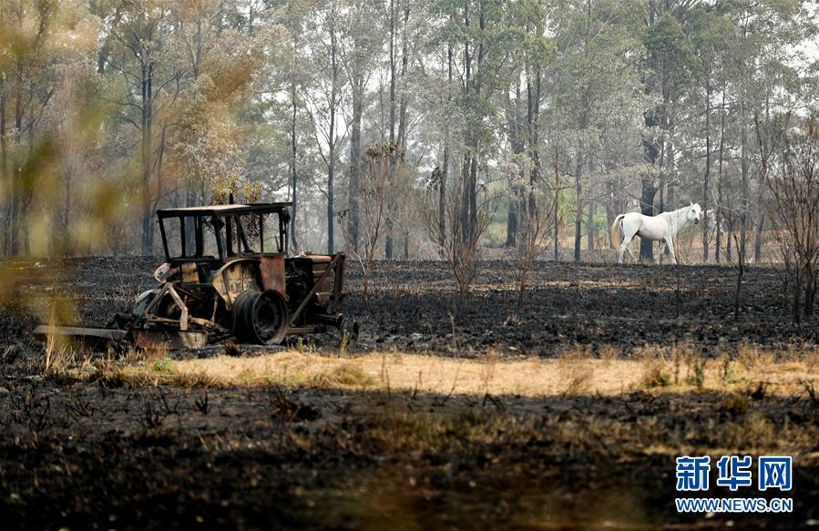 (國際)(5)澳新南威爾士州因林火進入緊急狀態