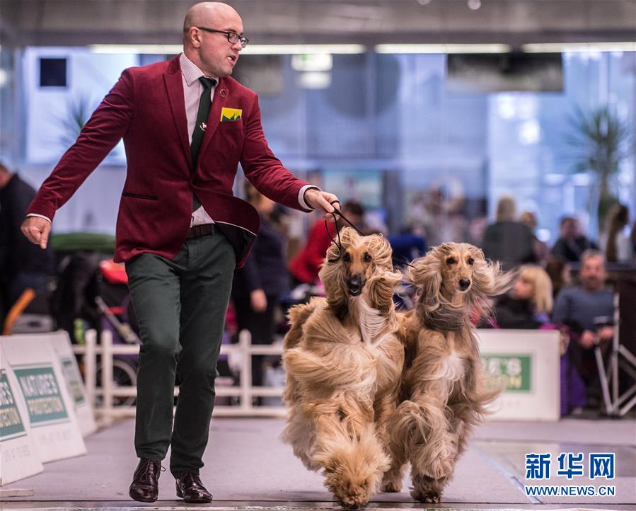 立陶宛首都举办国际狗展