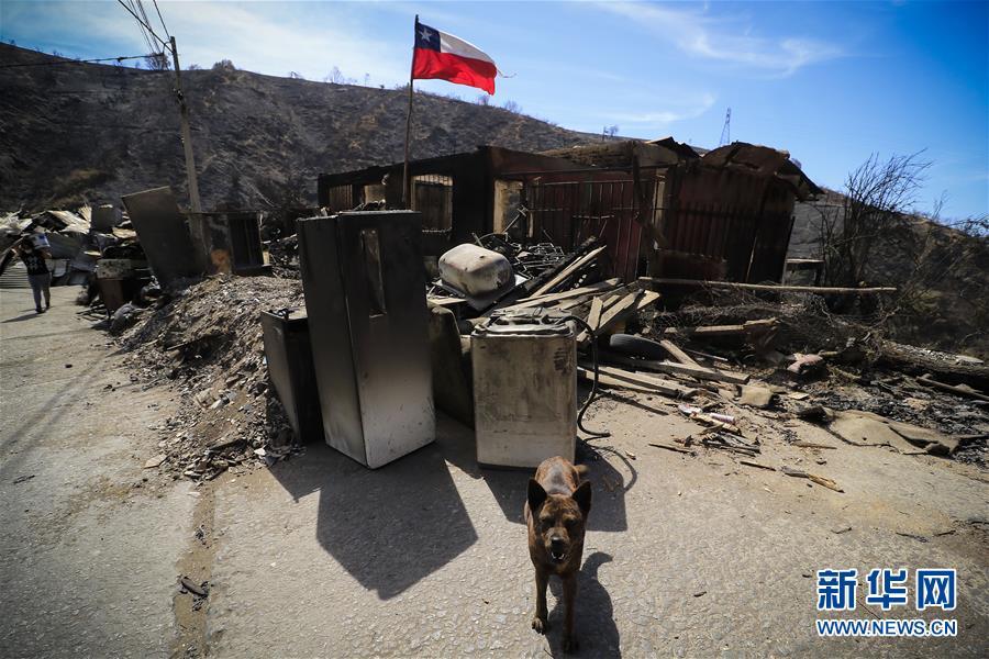 (國際·圖文互動)(1)智利瓦爾帕萊索森林大火殃及200多所房屋