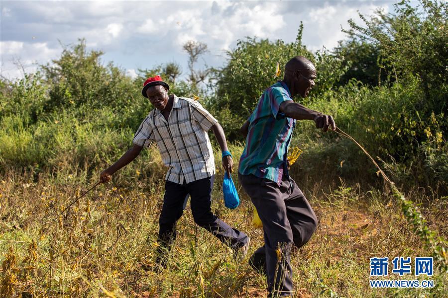 (国际)(7)蝗灾肆虐肯尼亚