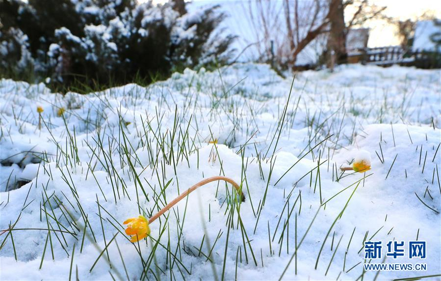 (XHDW)(2)白俄羅斯春雪