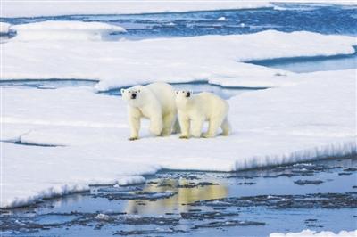 不用担心,北极出现臭氧空洞只是因为太冷了