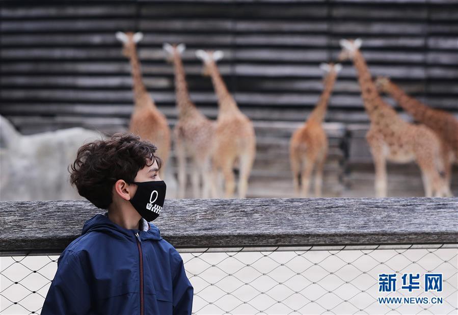 (国际疫情)(1)法国巴黎动物园重新开放