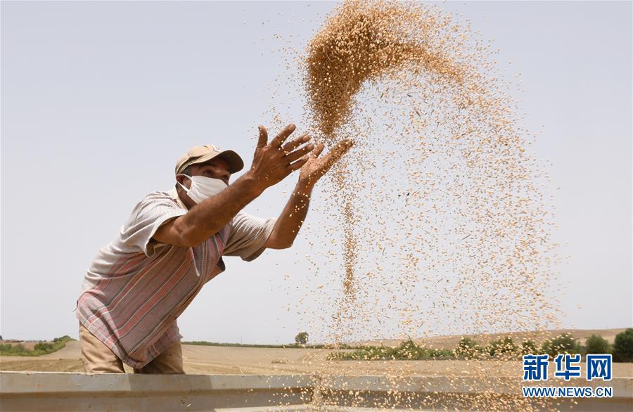 (国际)(2)世界粮食日:维护全球粮食安全 世界各国休戚与共