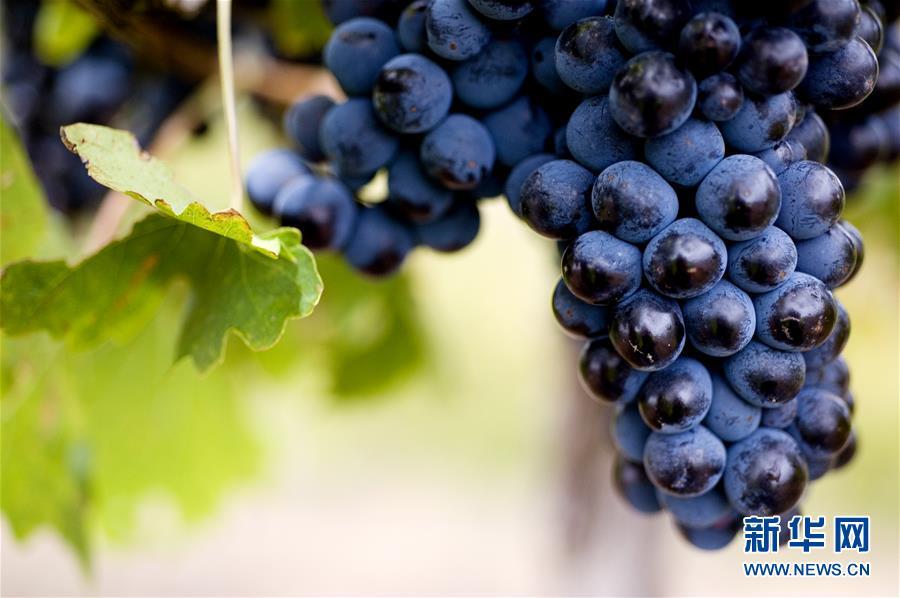 (第三屆進博會·圖文互動)(4)專訪:進博會是了解中國市場的好機會——訪澳大利亞諾瓦維塔葡萄酒集團創始人卡臣