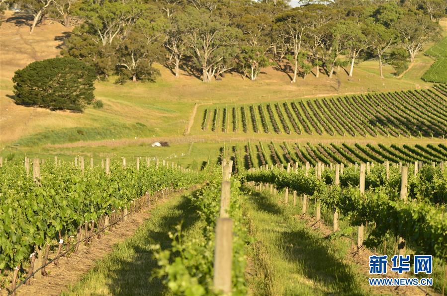 (第三屆進博會·圖文互動)(5)專訪:進博會是了解中國市場的好機會——訪澳大利亞諾瓦維塔葡萄酒集團創始人卡臣