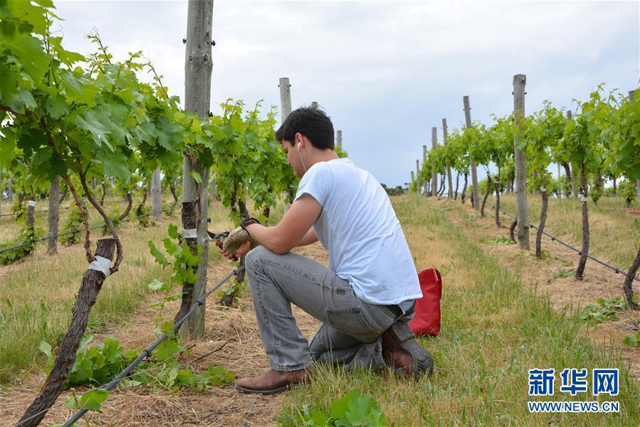 (第三屆進博會·圖文互動)(7)專訪:進博會是了解中國市場的好機會——訪澳大利亞諾瓦維塔葡萄酒集團創始人卡臣
