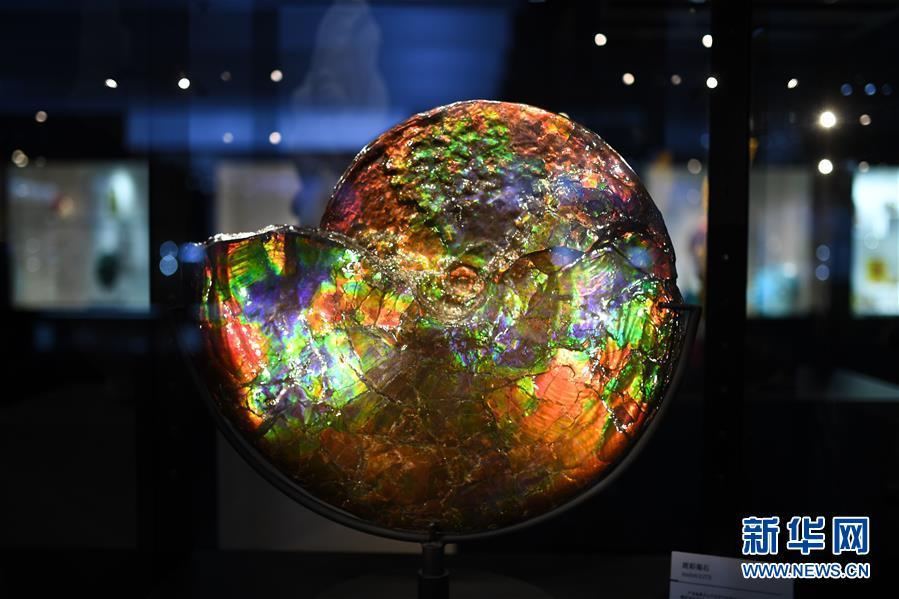 (第三屆進博會·新華視界)(1)觀展體驗:多彩·絢爛·未來感