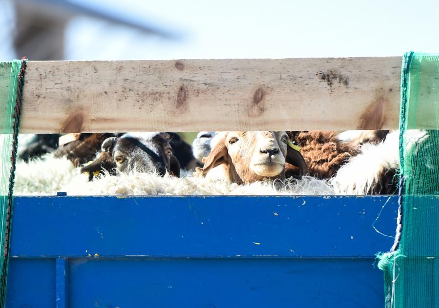 共克时艰!中国援助蒙古国新冠疫苗运抵乌兰巴托