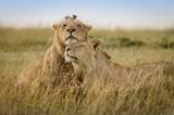 攝影師展示非洲野生動物的浪漫情懷