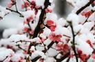塔什幹飄雪的春天(高清組圖)