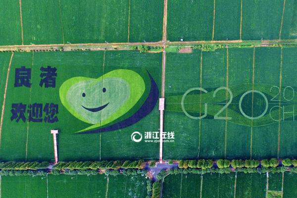 """喜迎G20 杭州有片稻田種出了""""笑臉"""""""