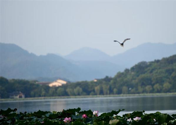 【聚焦G20】西湖之晨