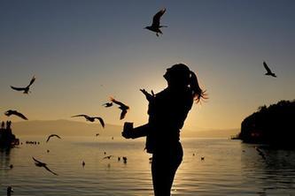奧赫裏德湖上海鷗飛
